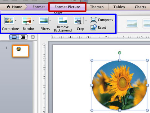 Adjust Picture Options in PowerPoint