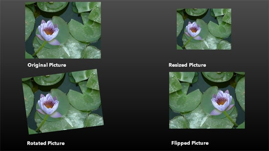 Resize, Rotate, and Flip Pictures in PowerPoint