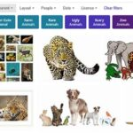 Bing Image Search: Bing Images Search by Type