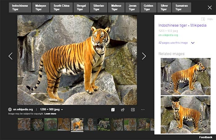 Bing Image Search by Size